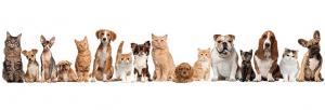 Chiens, chats, et pas seulement chez Vetcare !