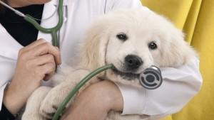 Laissez votre animal en de bonnes mains chez Vetcare