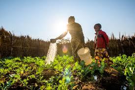 Allianz assurance agricole