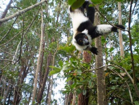 Aventour Madagascar, Andasibe