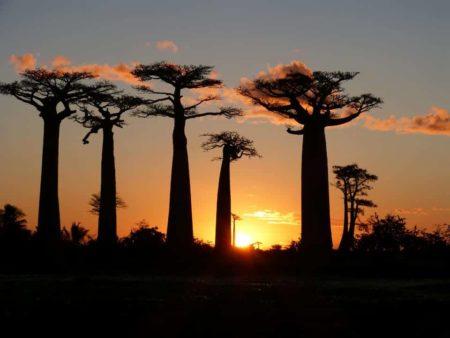 Aventour Madagascar, baobabs