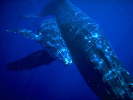 Hôtel Vanivola, baleines