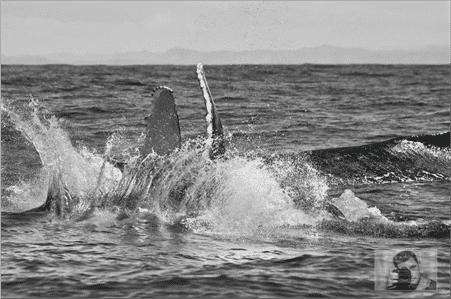 Hôtel Samaria, baleines