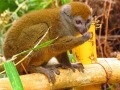 Madagascar National Parks, Ranomafana