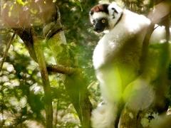 Vohibasia, Madagascar National Parks
