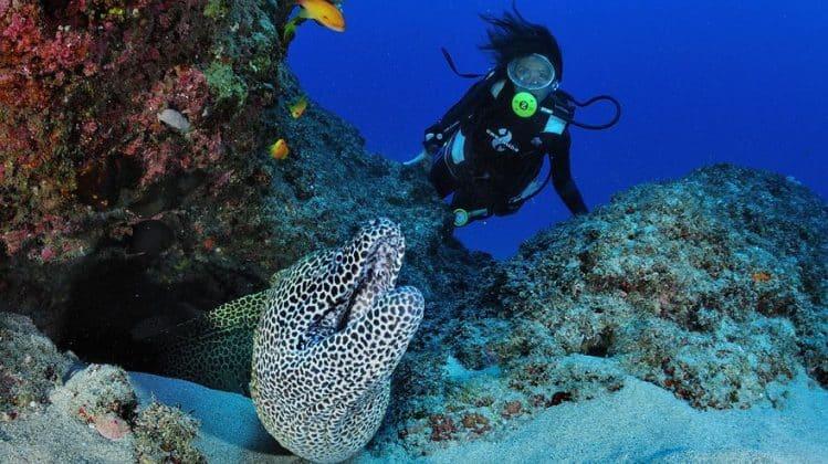 Plongée sous-marine Madascaph