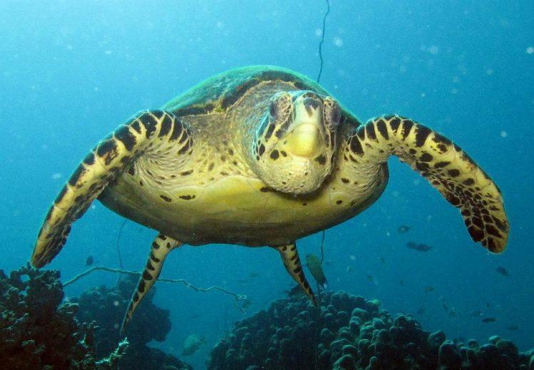 Scuba Nosy Be, tortue