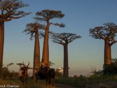 Détours Madagascar Morondava