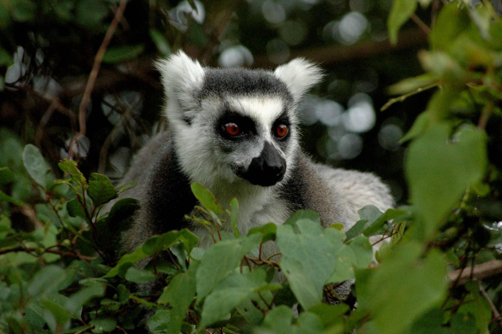 Détours Madagascar RN7