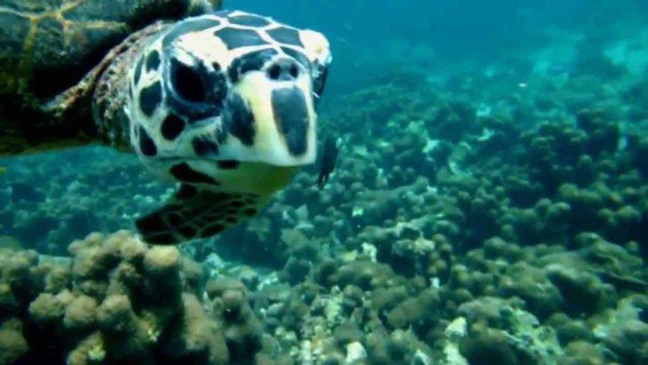 Menabe plongée fonds sous-marins