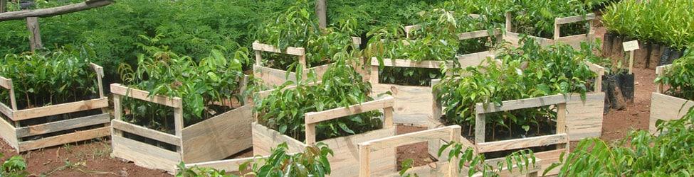 SNGF, production de plants