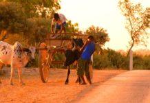 Zaha Soa, tour opérateur Madagascar