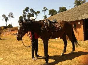 Équitation au Marlix Country Club