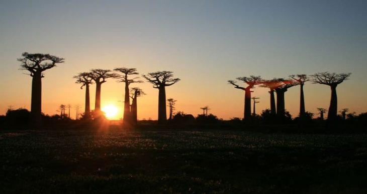 Transcontinents Baobabs à Morondava