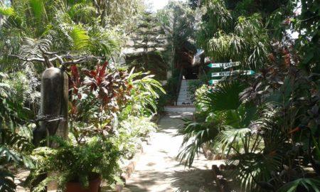 Une végétation tropicale Tropicana