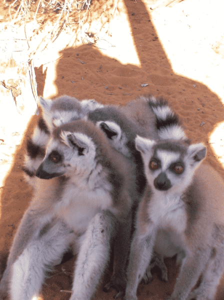 Lemur Rescue Madagascar, faire un don