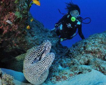 Madascaph, plongée à Madagascar vers Diego